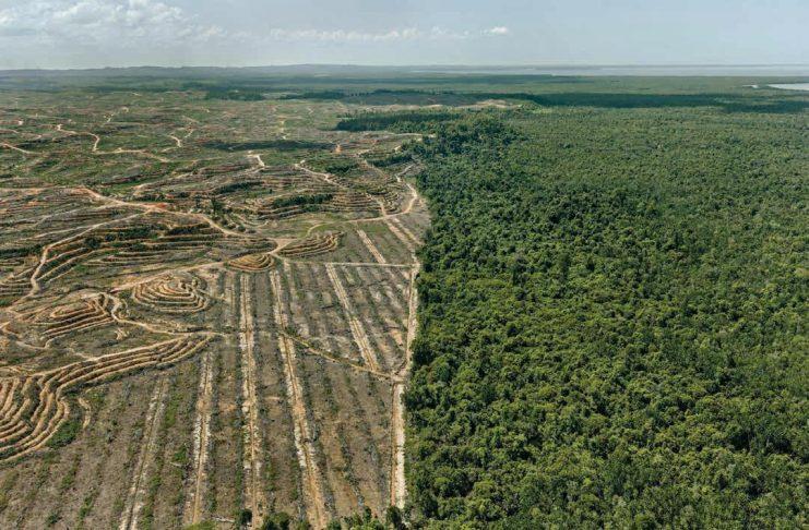 Antropocene piantagione di olio da palma